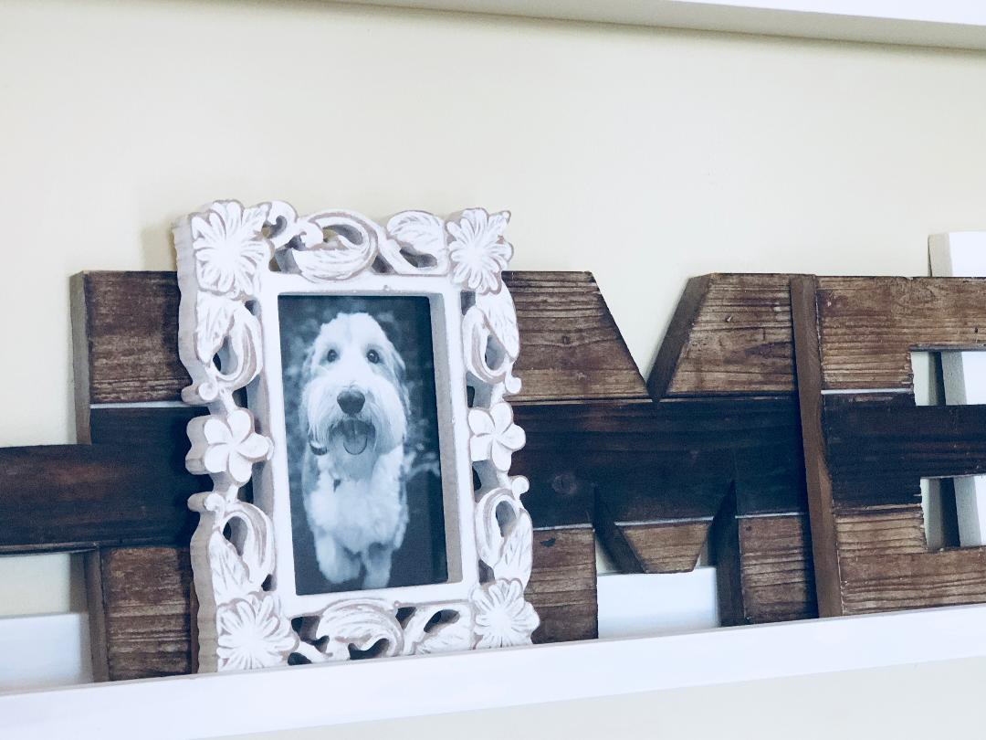 close up of dog in a photo frame on a gallery wall shelf