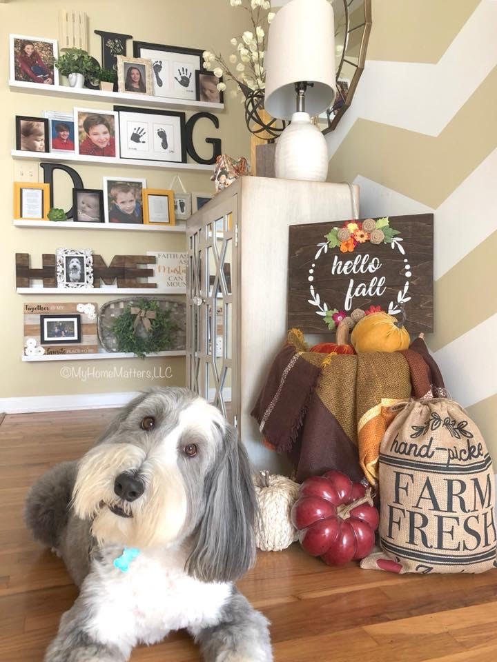 Gallery Wall with picture ledges, family photos, home decor pieces, chevron wall, Bearded Collie