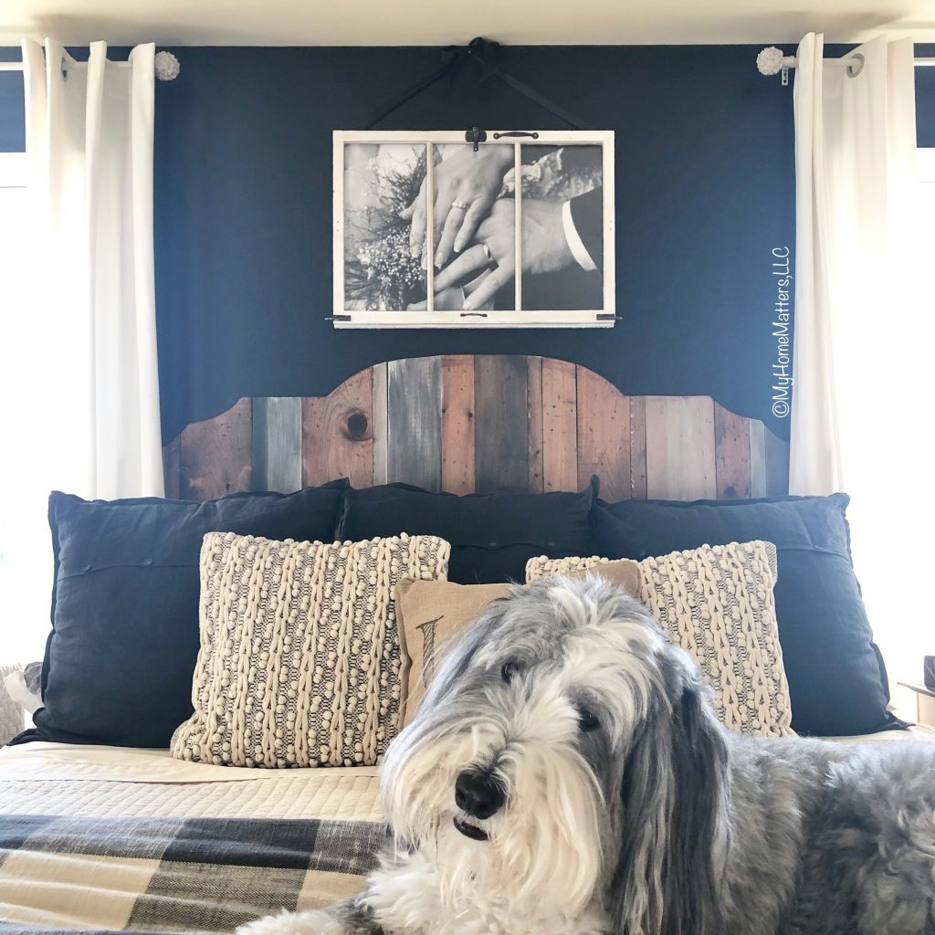 Bearded Collie on a master bedroom in front of a black wall